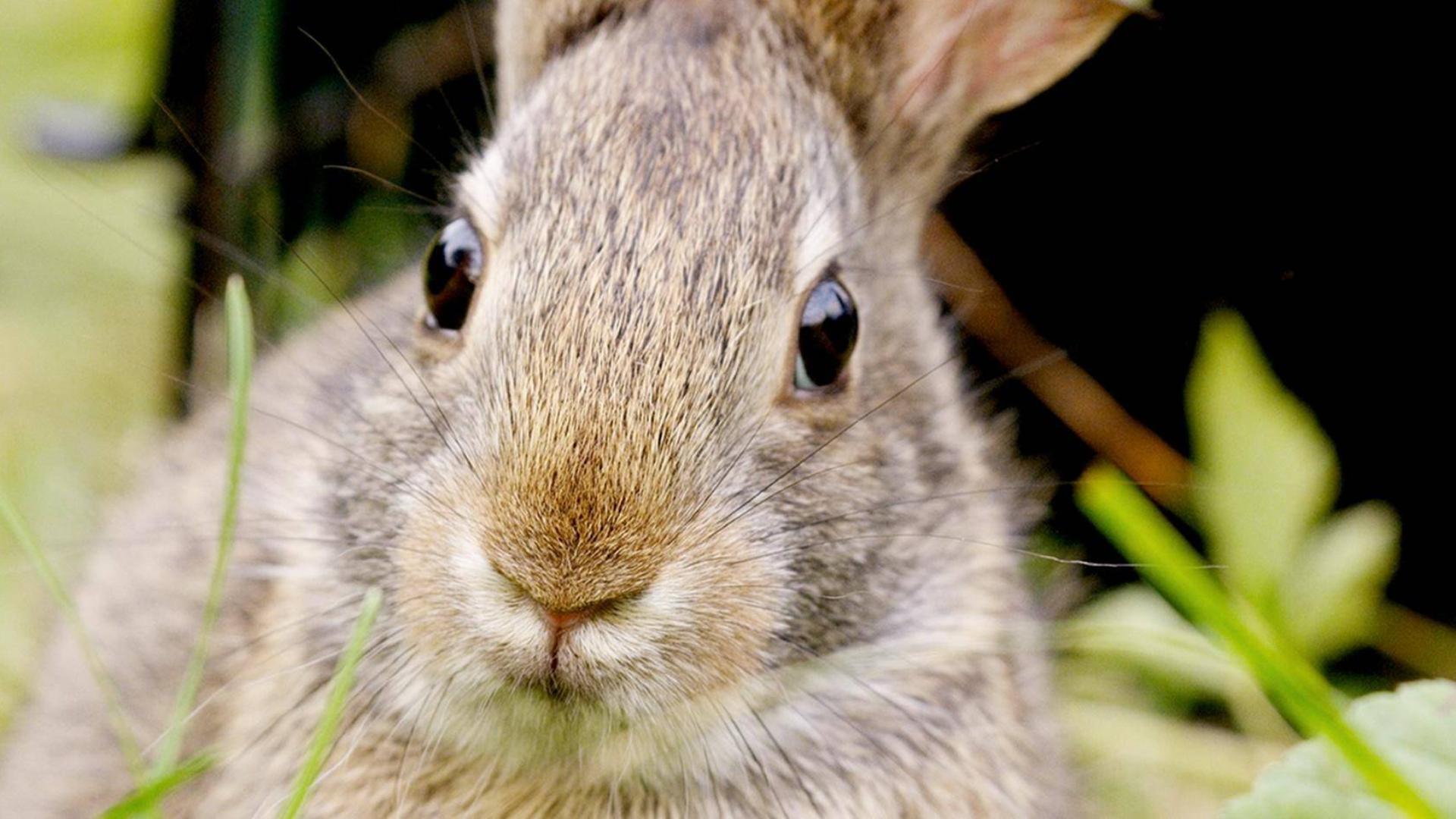 纪录片.PBS.了不起的兔子.2020[高清][英字]