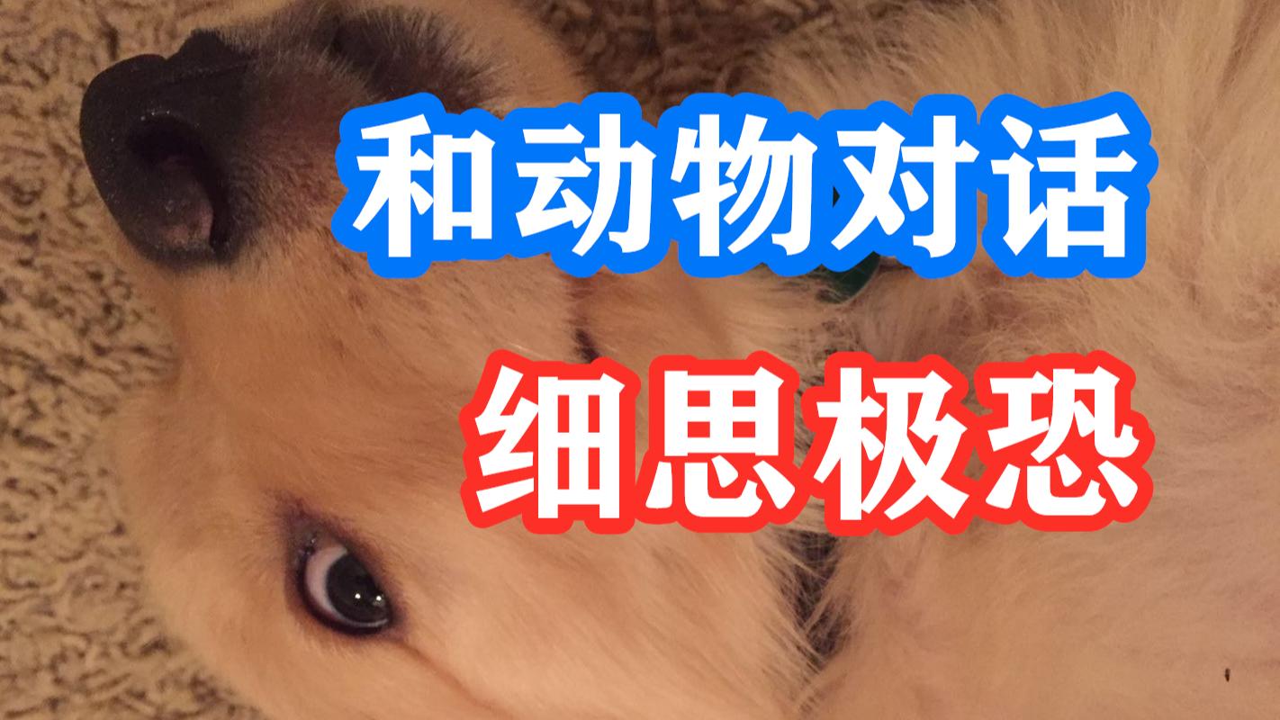 细思极恐!能和死去动物沟通的人,狗狗死后发回信息【邓肯解说】