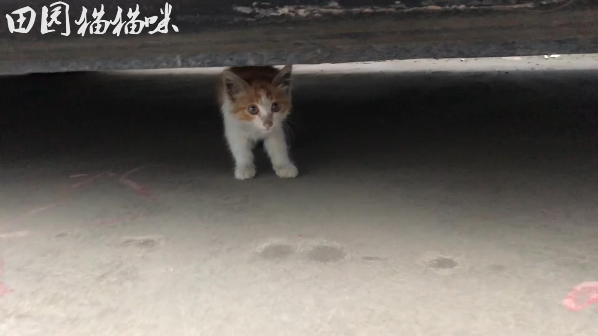 流浪猫:躲在车底的小猫,叫声凄惨,给它食物就狼吞虎咽的吃起来