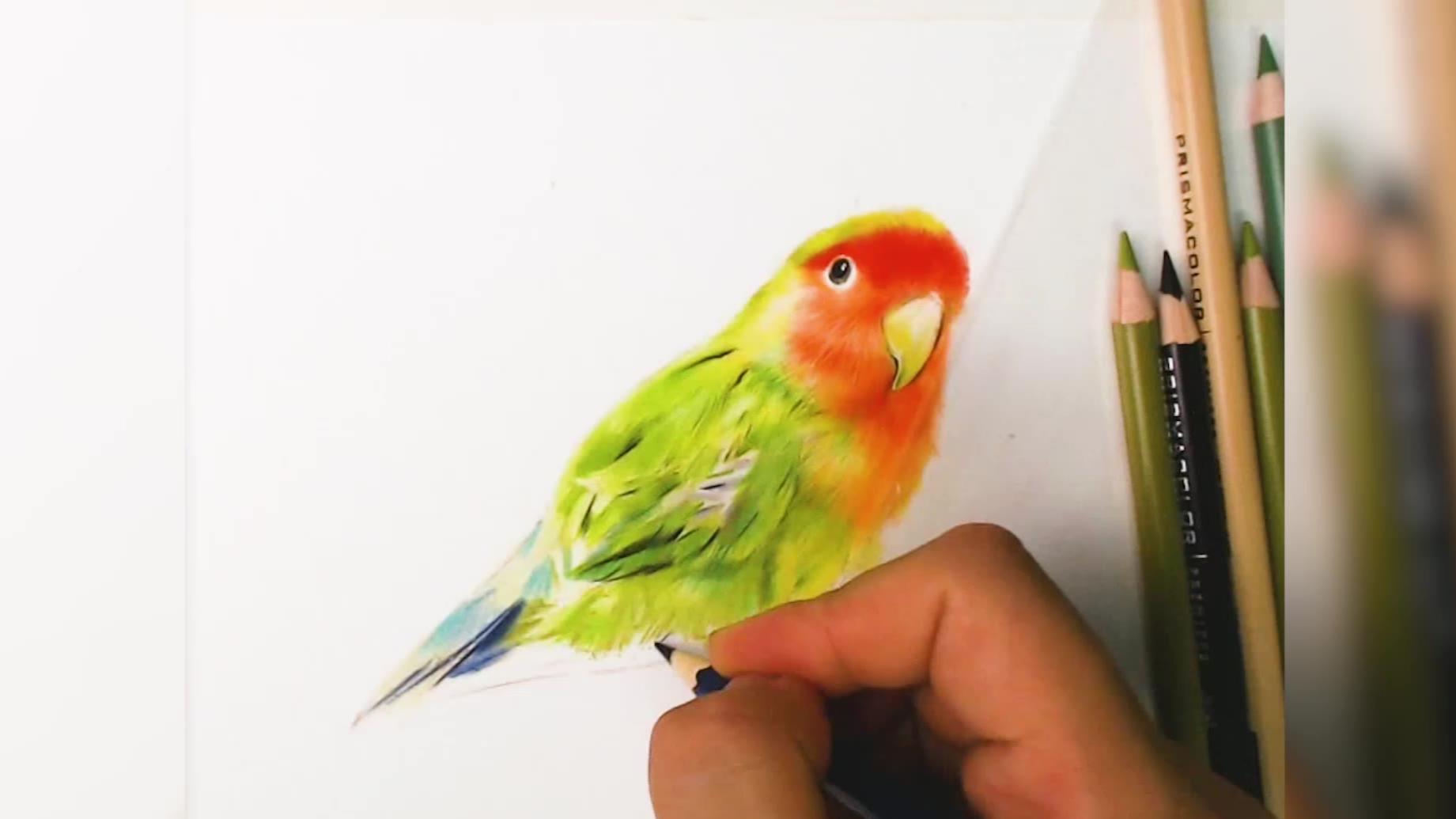 一大早被鸟叫声吵醒,画只鹦鹉有人喜欢吗,素描视频彩铅怎么画,美术艺考,素描彩铅手绘视频,素描怎么画