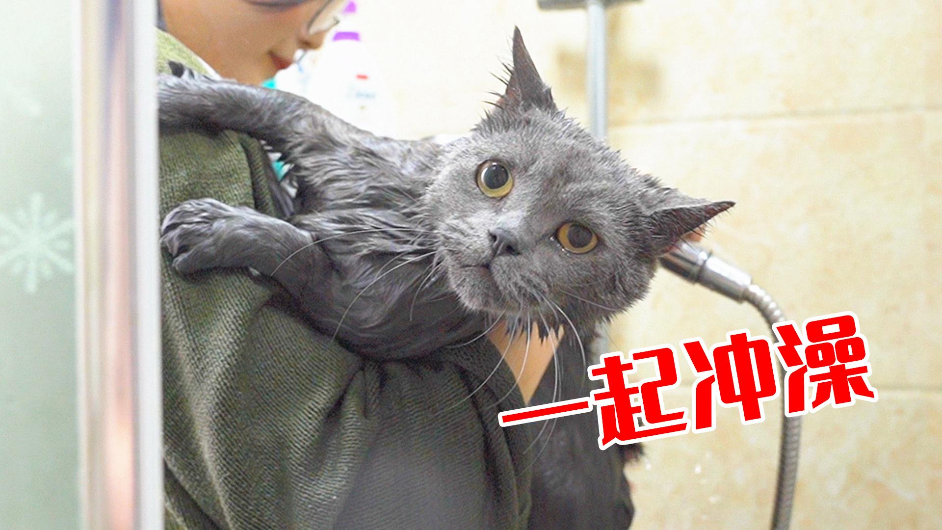 猫咪一年没洗澡,极力反抗,气的主人直接和它一起冲澡!