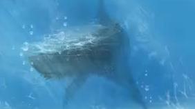 【乌拉喵】化身孤岛的鲸