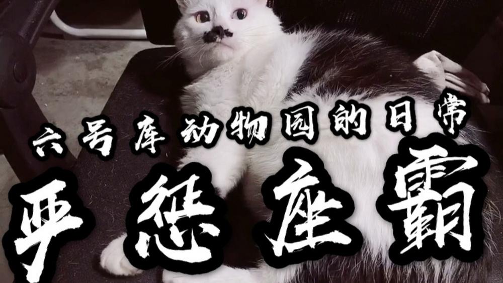 【六号库动物园】严 惩 座 霸!