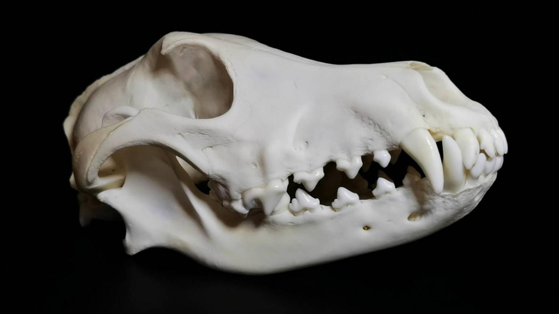 纯白之美:骨头是如何升华成标本的