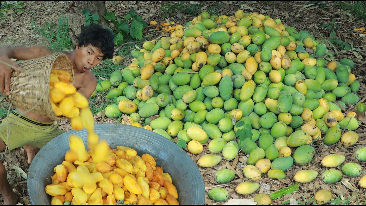 吃芒果我只服这位小哥,就连印度人任何看了都甘拜下风!