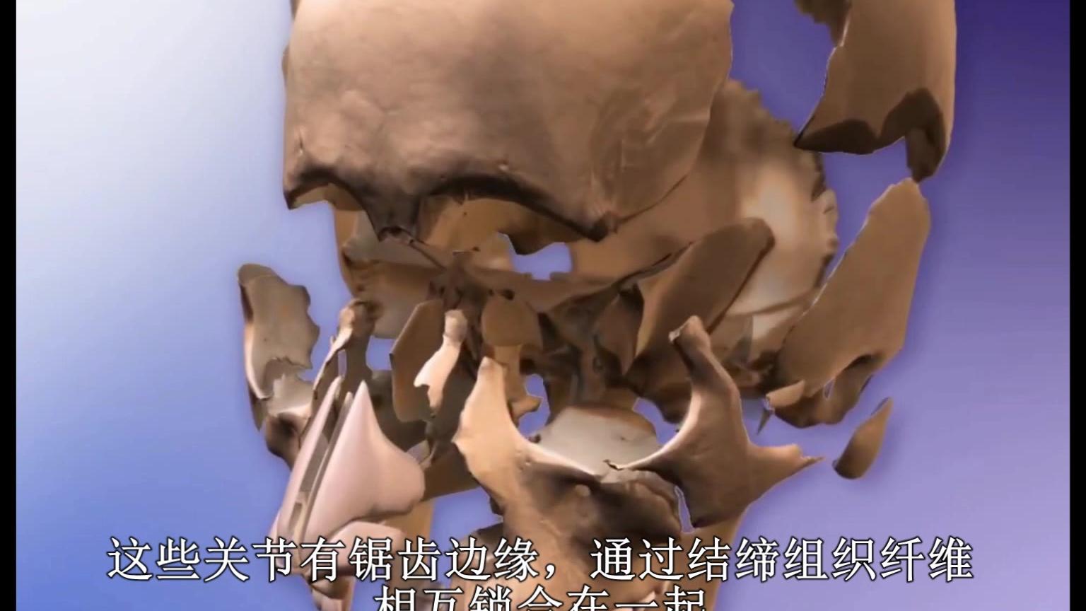 头颅骨连接 中文字幕