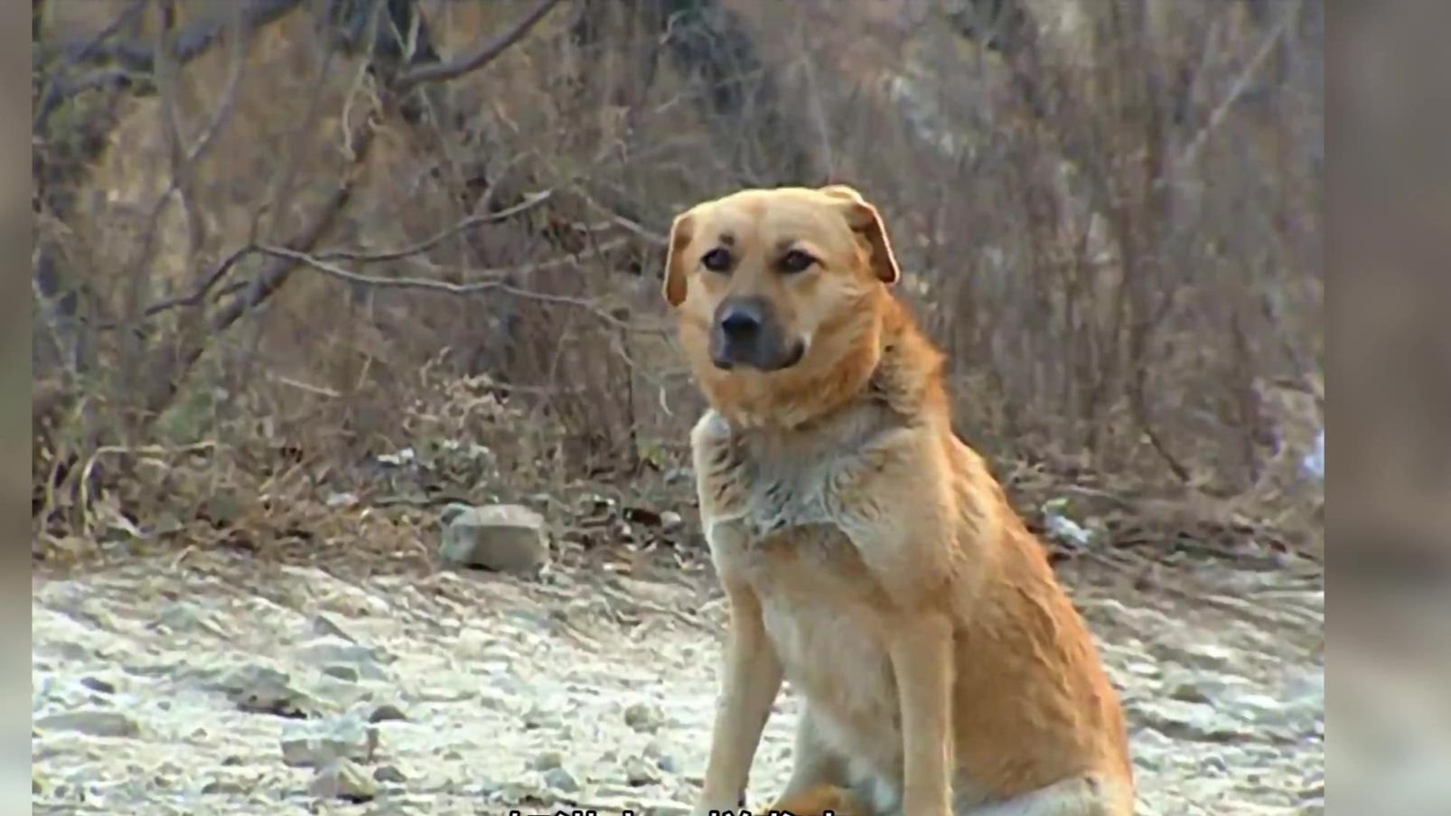 【武侠人物志】阿黄,武侠第一狗,一只具有内功重情重义的狗