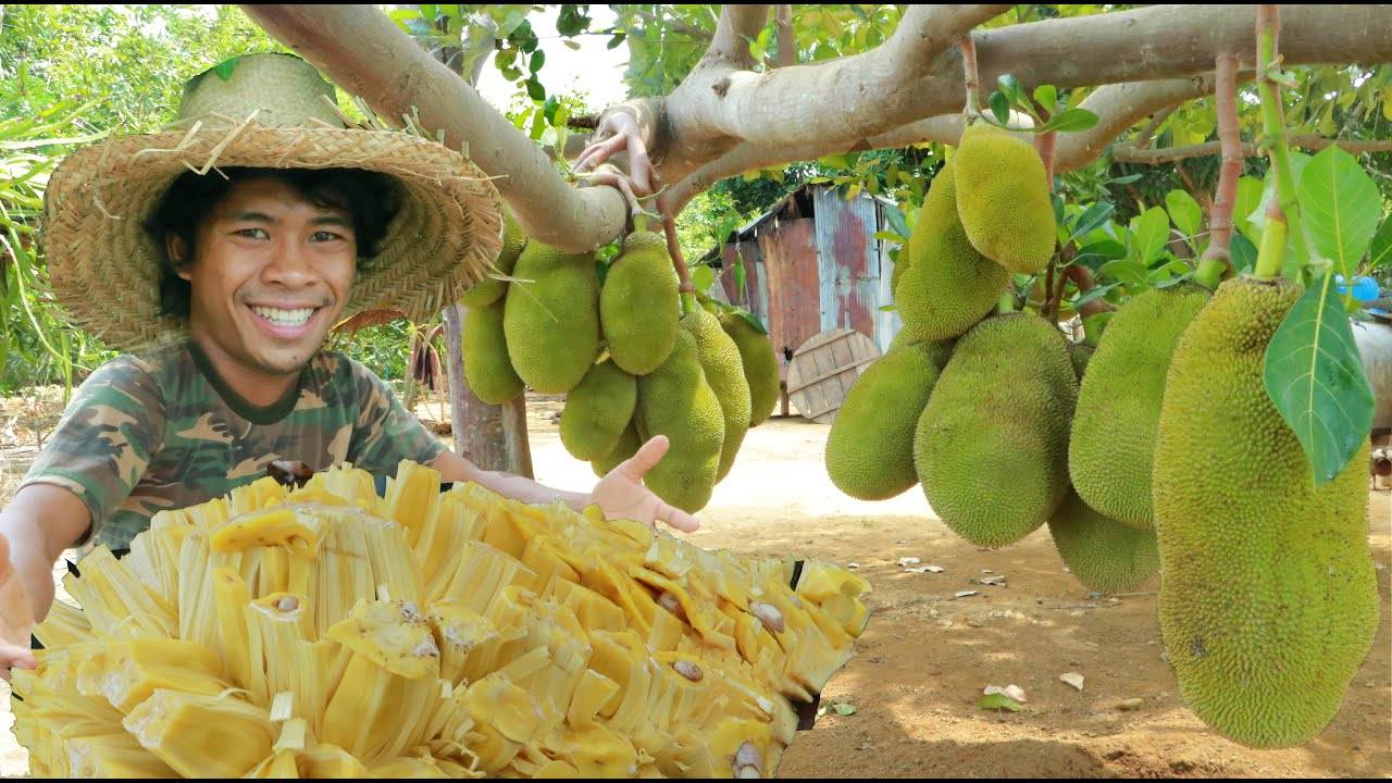 草帽哥吃超大的菠萝蜜,这口下都停不下来,看着都带劲!