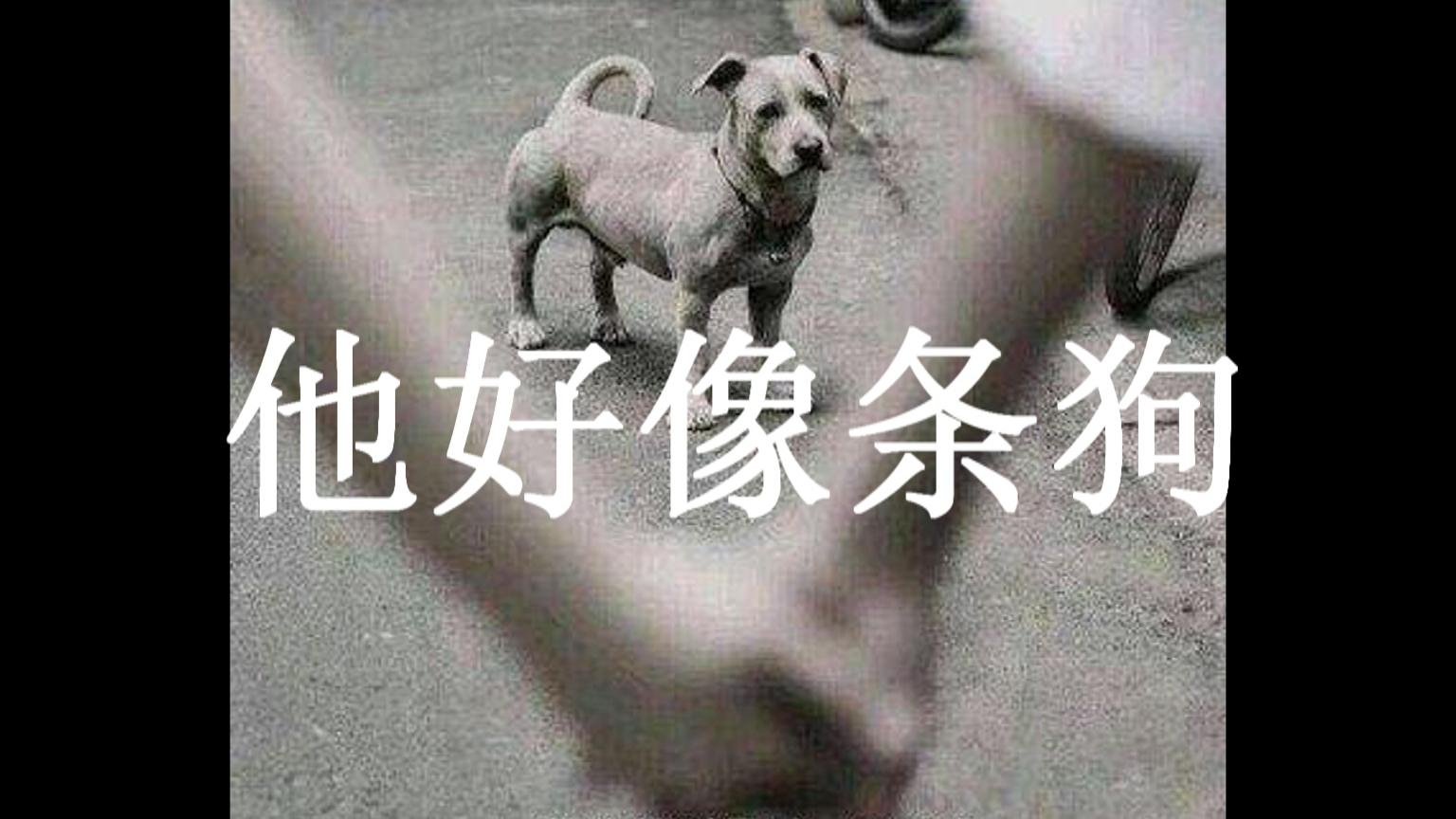 答应我好不好,不要做舔狗,你会被伤的!