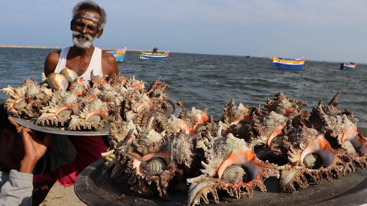 印度六爷改善伙食,拿来许多的海螺,看看这吃法,不服都不行啊!