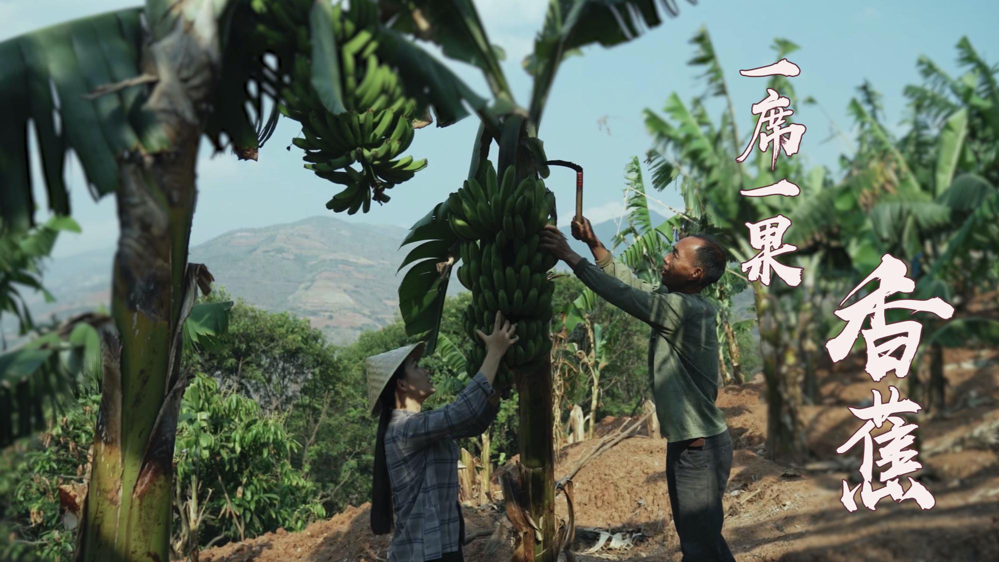 一席一果(一)怒江边上的香蕉