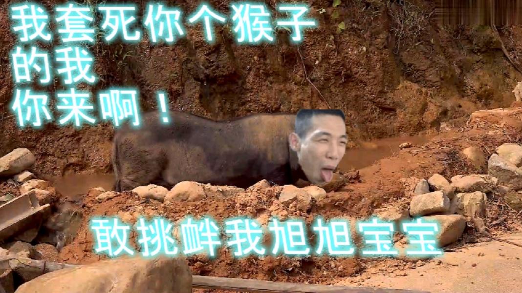 【华农戏猴】旭旭宝宝逃跑计划