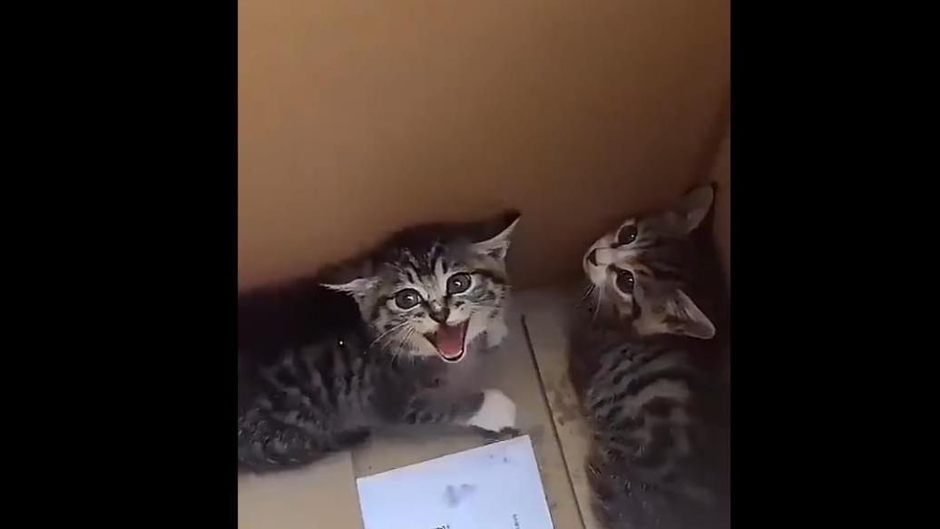 一只被捡来的小猫,一开始奶凶奶凶的,后来还不是随便撸