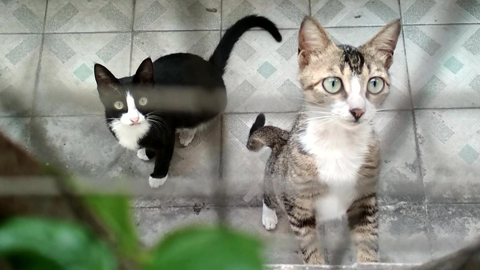 【猫vlog】看看我家的猫是什么神仙颜值呀!这谁顶得住啊