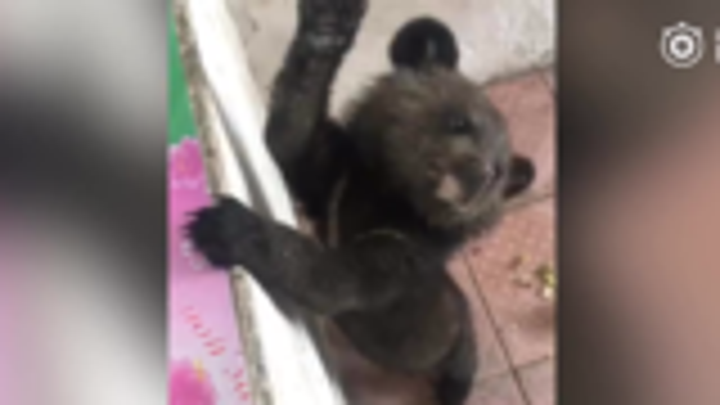 熊孩子跟村民回家蹭饭10余天 要被送走时村民女儿伤心落泪