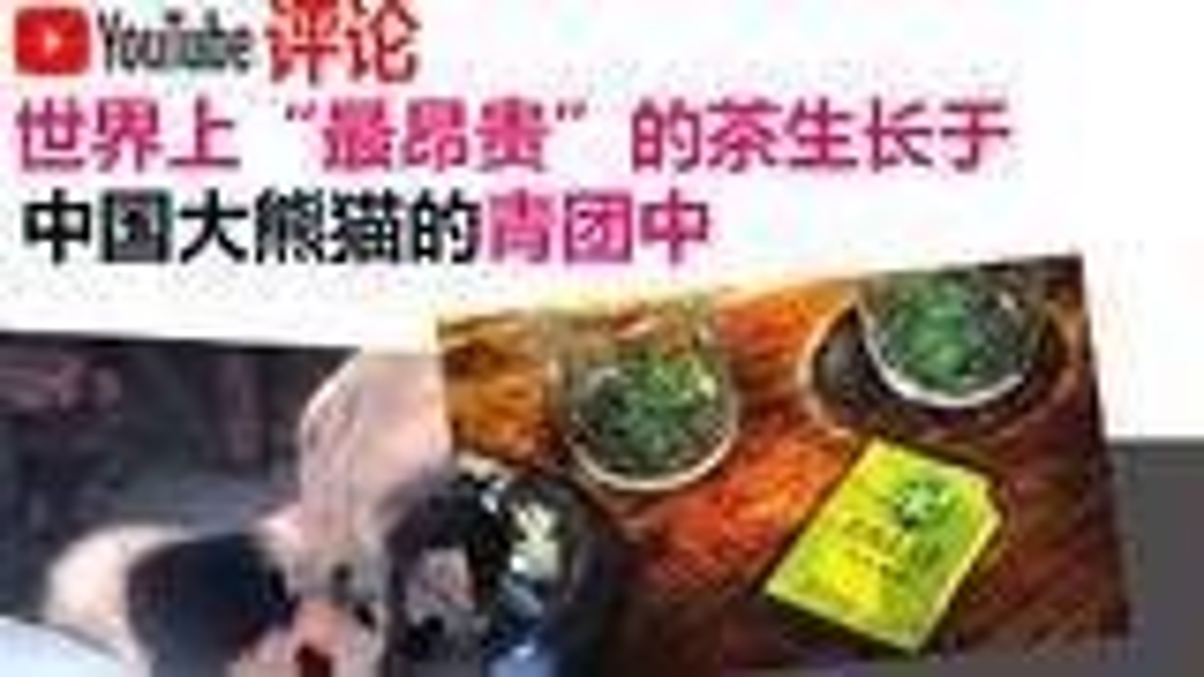 "youtube网友评论:世界上""最昂贵""的茶生长自中国大熊猫的青团中"