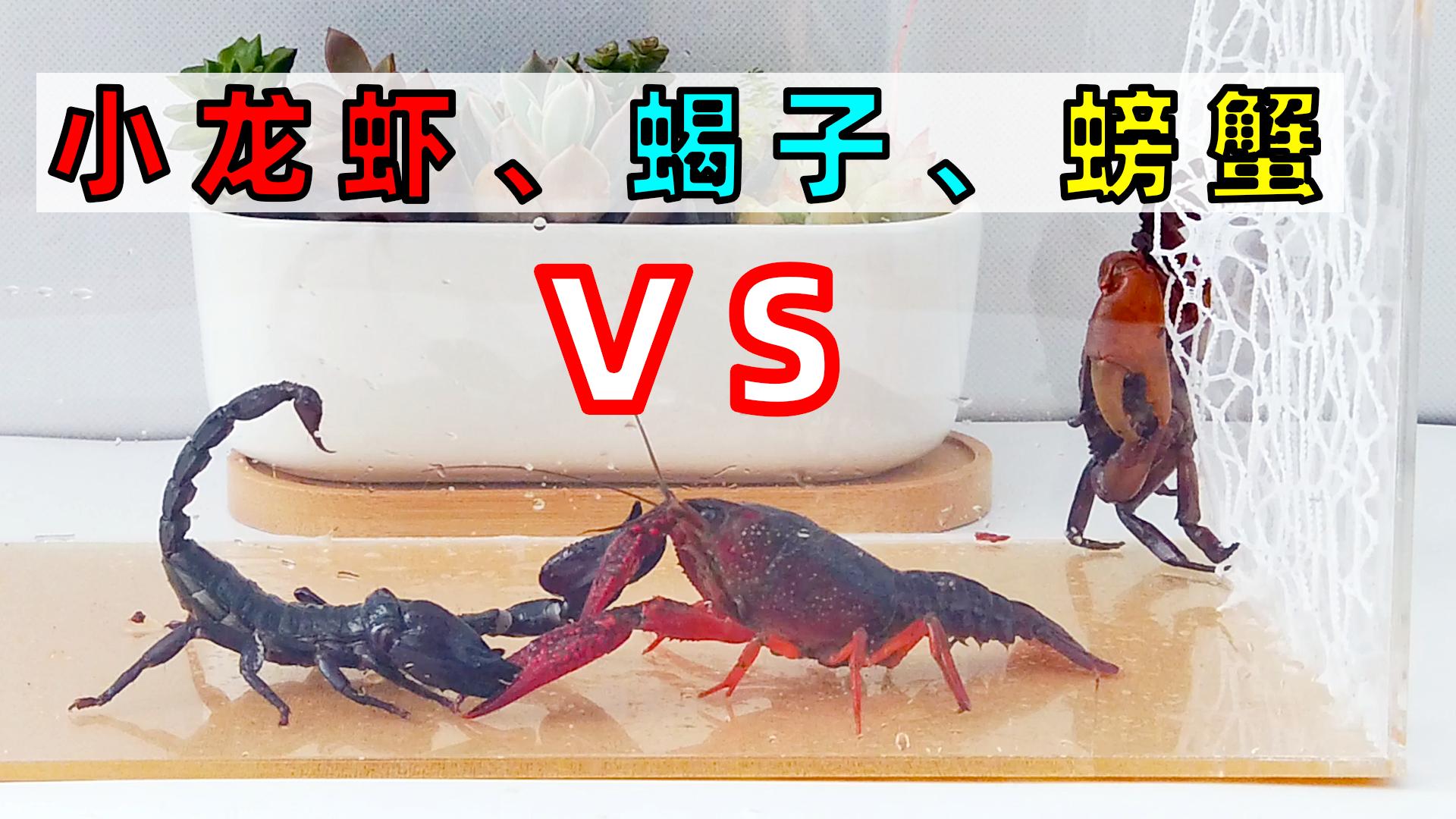 将小龙虾、蝎子、螃蟹放一起,看看谁才是王者?