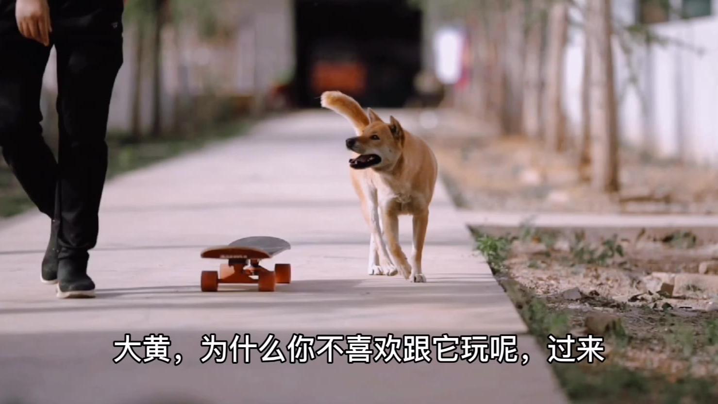 大黄听懂人话不断玩滑板,把老爷爷狗冷落了。
