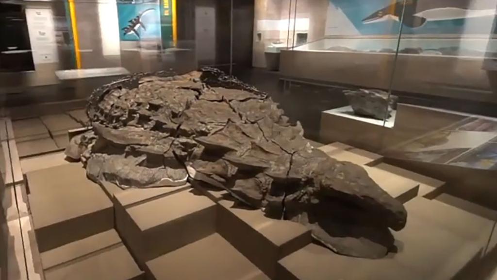 有皮肤有鳞片的恐龙化石,距今1.1亿年,90%的人认为是骗局