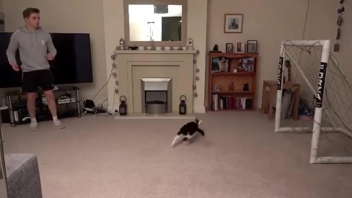 猫咪守门员