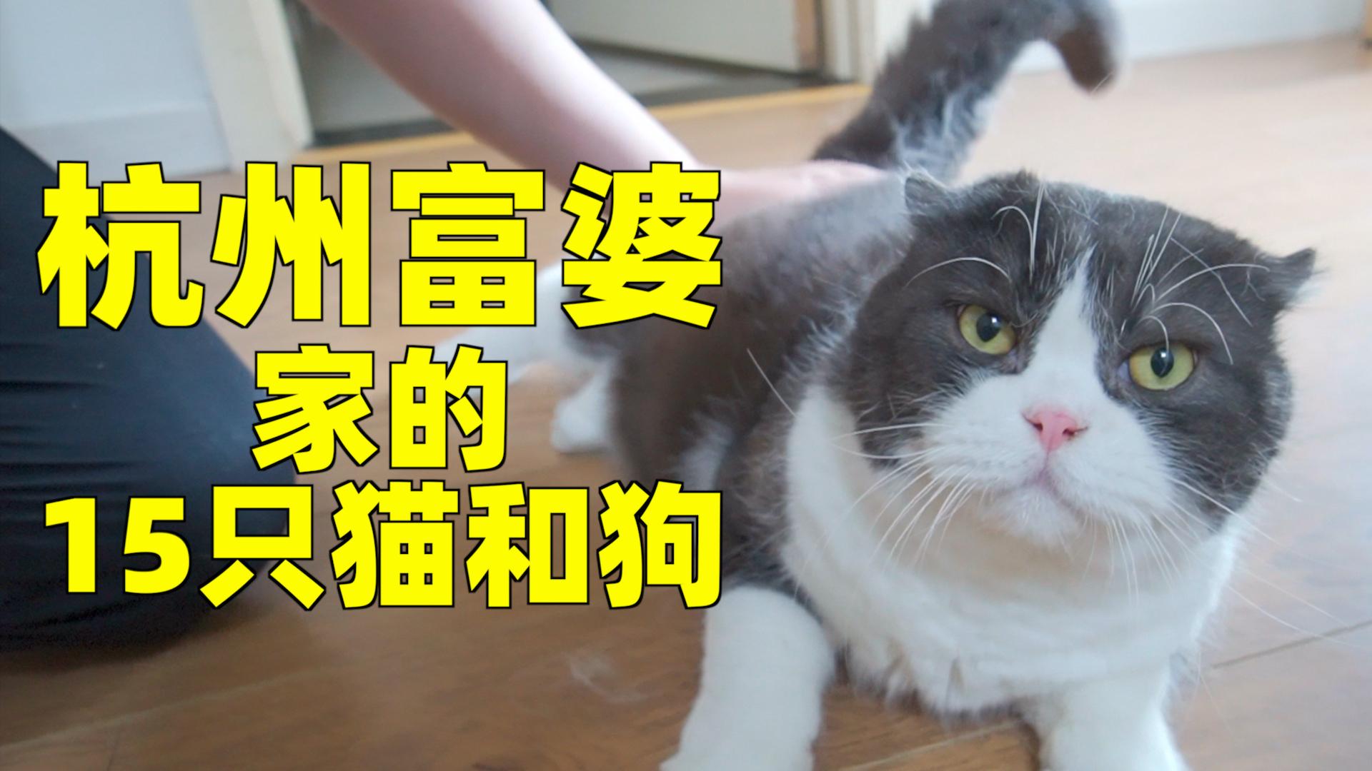 参观杭州富婆家的15只猫,您家还缺猫吗?上过大学的那种!