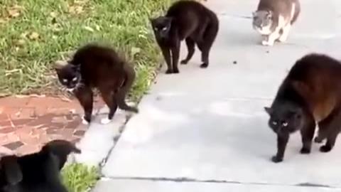 狗:惹不起惹不起溜了溜了