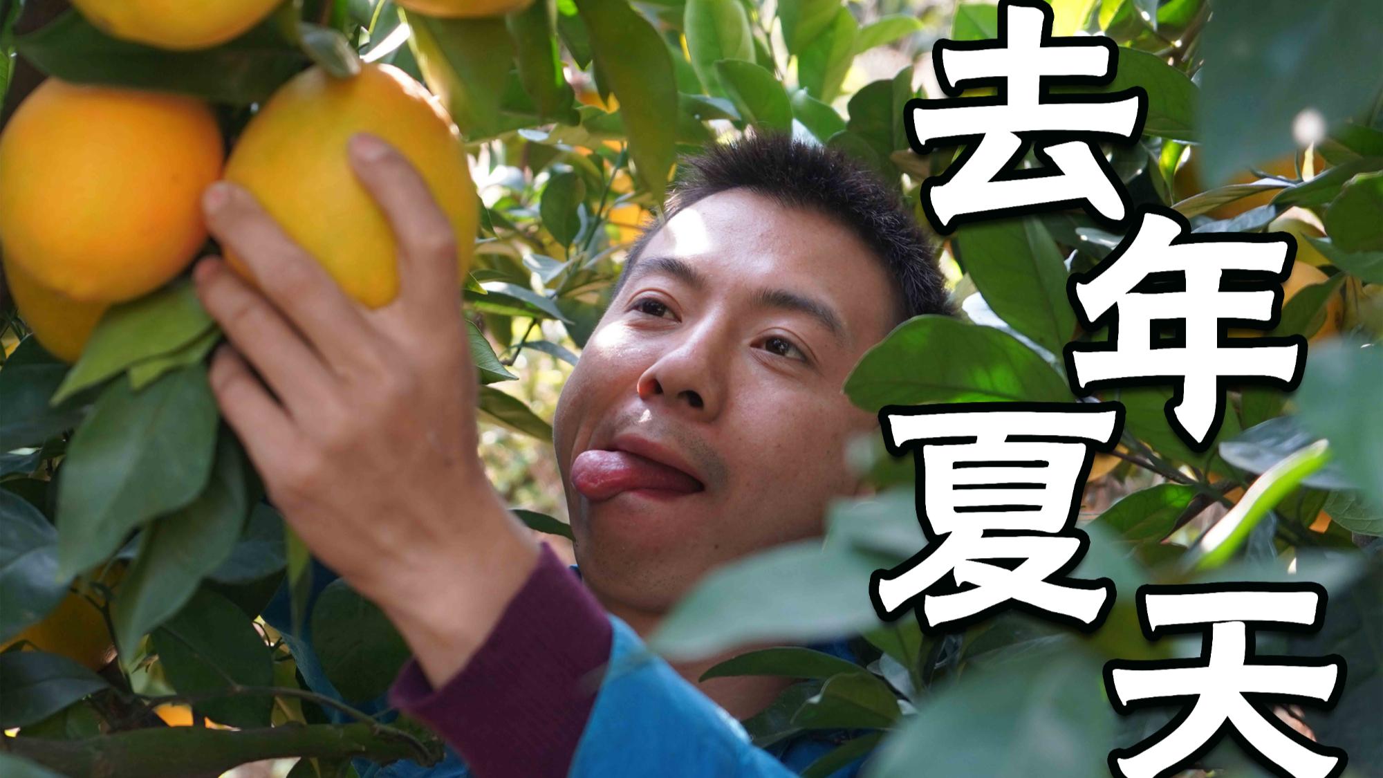 【华农兄弟】去年夏天【出道616】祝AcFun13周岁生日快乐!