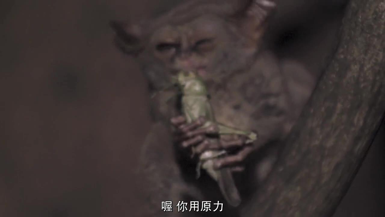 [纪录片][怪诞星球][S01E08][中文字幕]