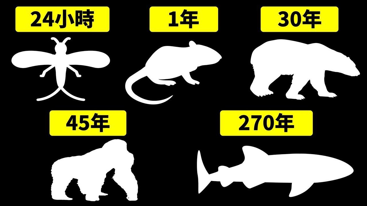 世界上寿命最短和最长的动物是什么?