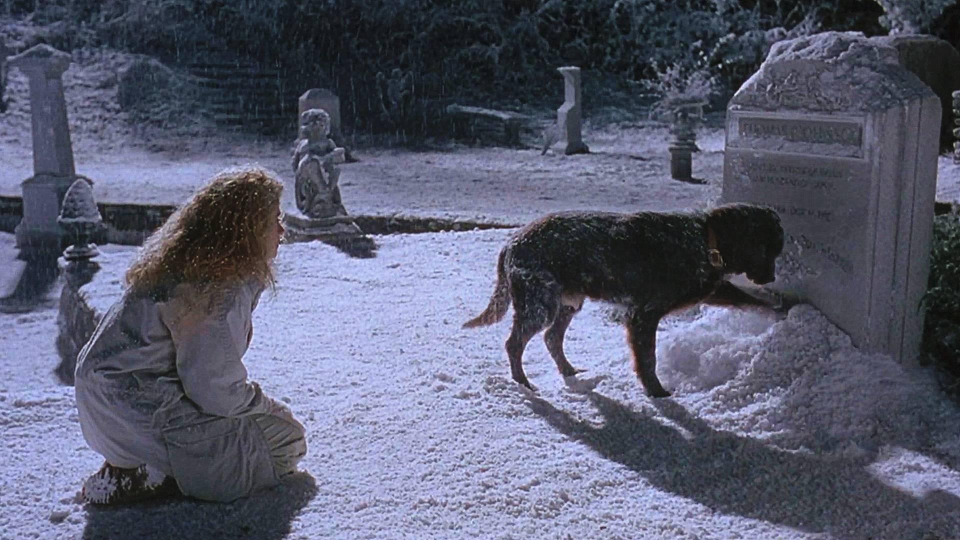 狗狗刨开墓碑积雪,妻子这才知道它是前世丈夫,一部感人爱情电影