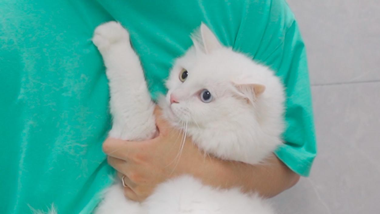 猫咪洗澡屡次逃跑被抓,气得猫咪直接在主人怀里放屁