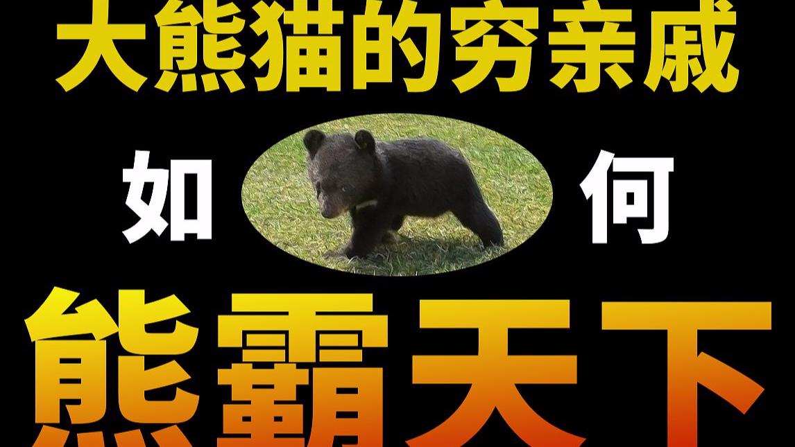 【基德】扒皮疯狂作案的四川黑熊家族 防御熊的唯一正确方式