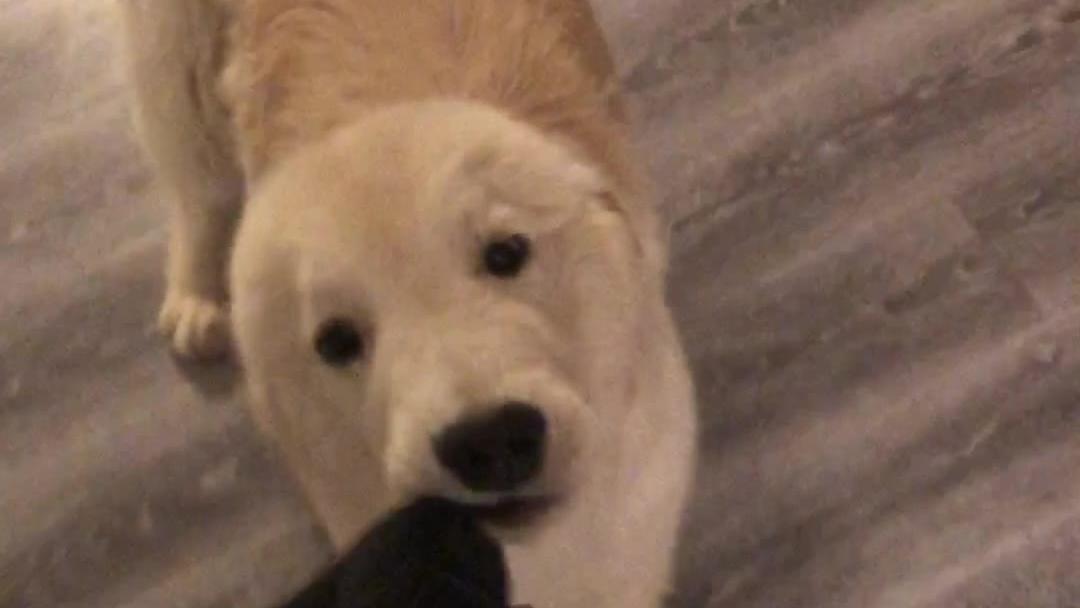 小咪:经常说我像狗的姜阿姨遇到了真正的狗狗,变得有点慌乱