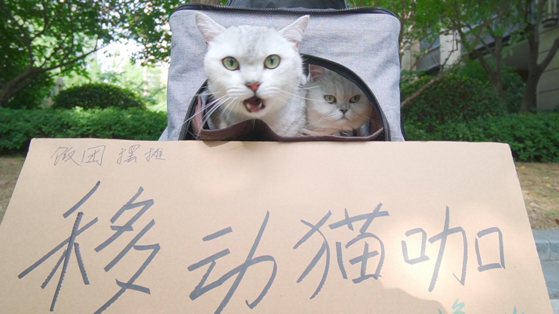 出门遛猫还摆成了地摊.猫咪又怂又好奇,还要一连六七天?