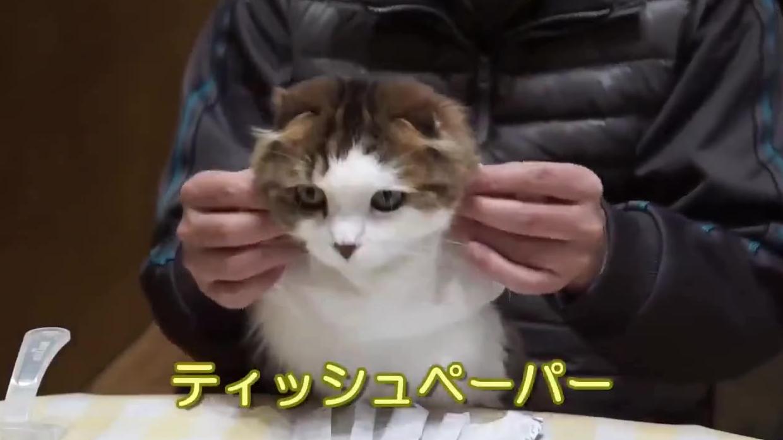 这只猫咪从小开始吃饭的时候戴围嘴戴习惯了,所以现在不管面前放着啥,都会下意识的把头伸过去...好乖