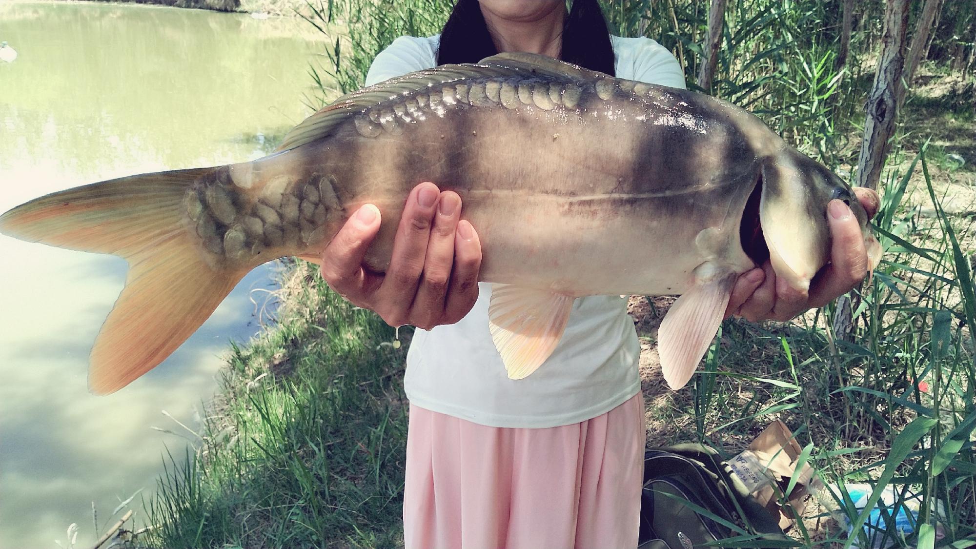 漂亮媳妇第一次手竿钓大鱼,没想到发挥这么好,鱼线切水声真好听