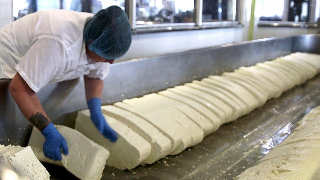 原来我们平时吃的奶酪是这样收获和制作的,奶酪收获加工全过程!