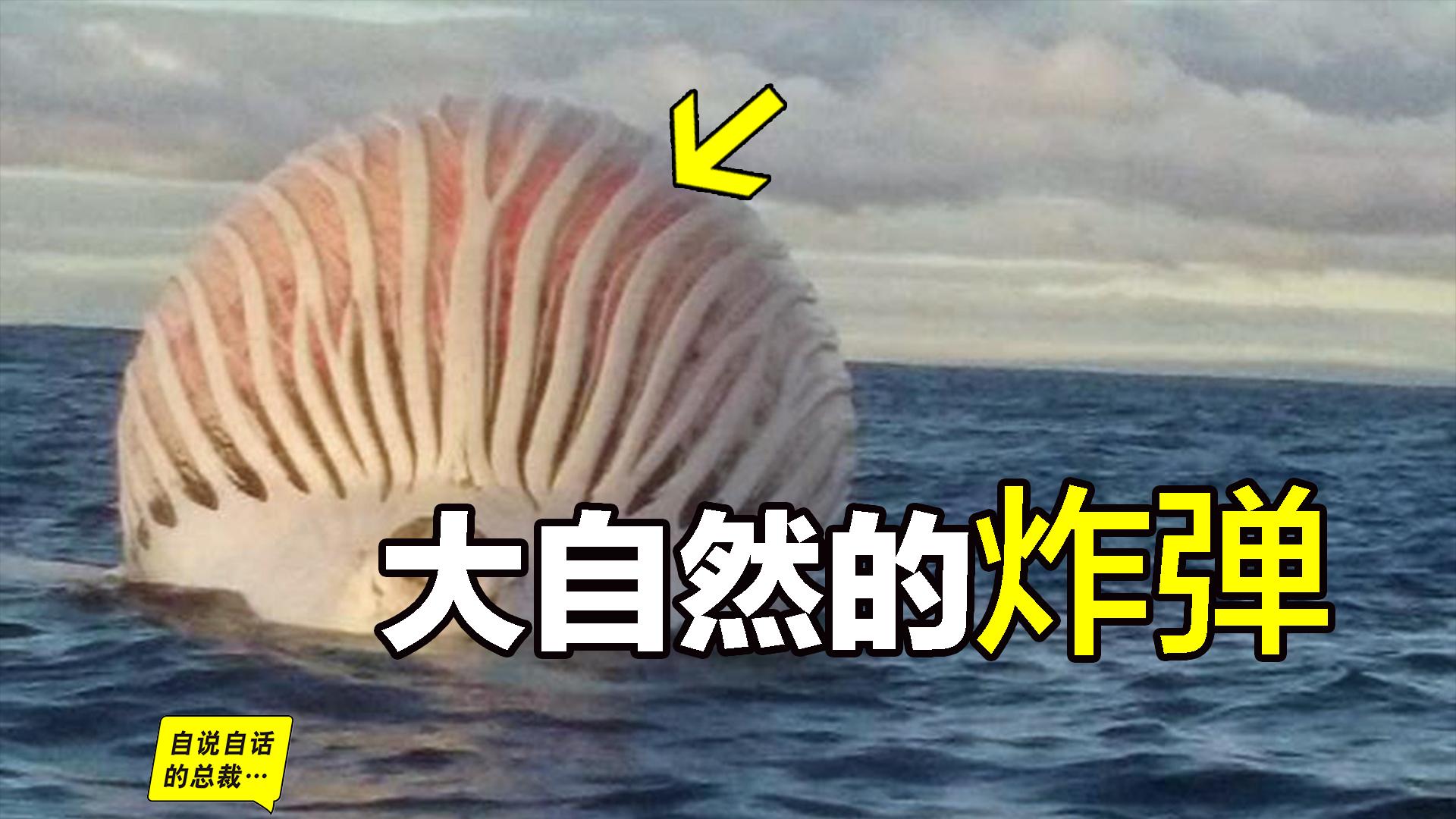 鲸爆:大自然的炸弹,这是一个有味道的视频