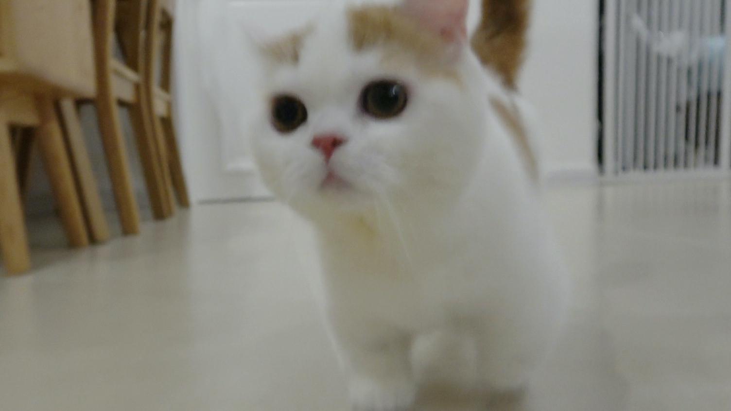 成熟的猫自己会养生