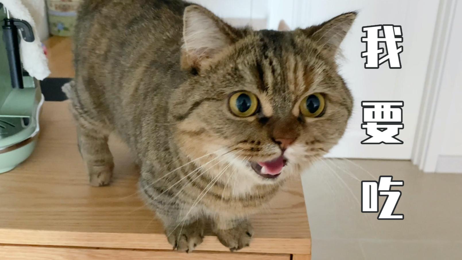 喂猫吃空气,纷纷表示好吃
