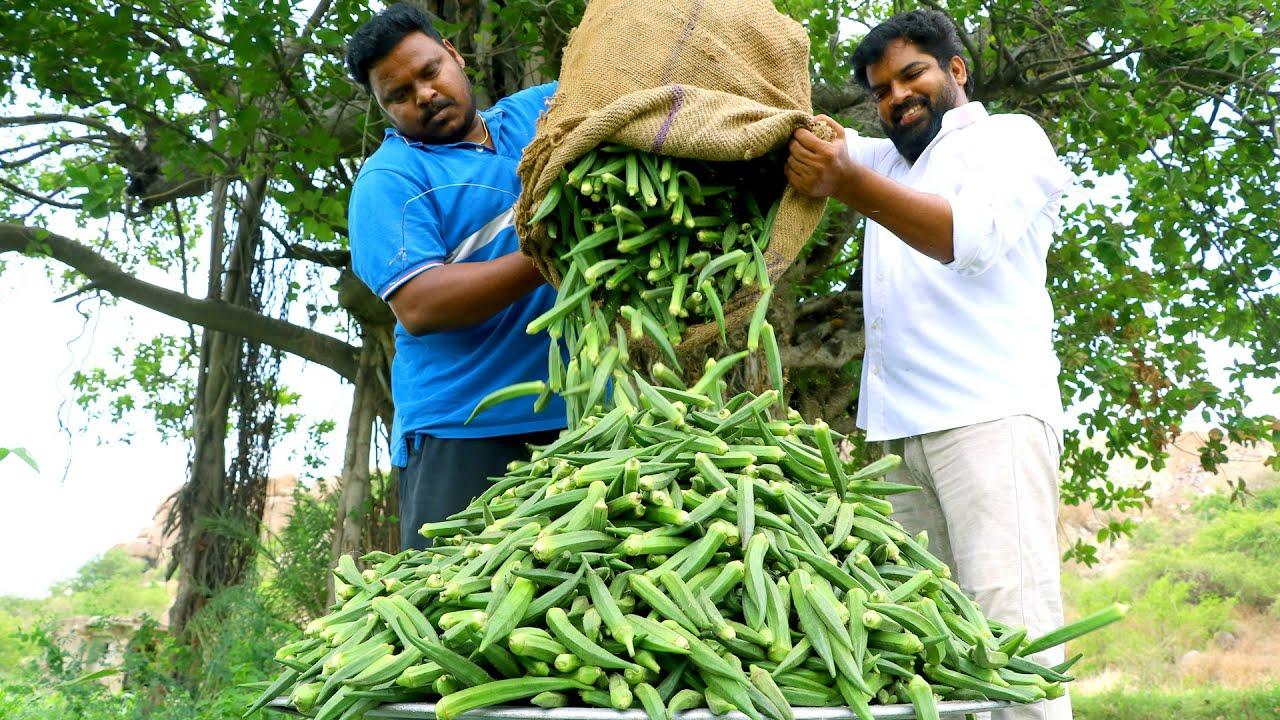 刚采摘的秋葵,看看印度大叔是怎么烹饪的?