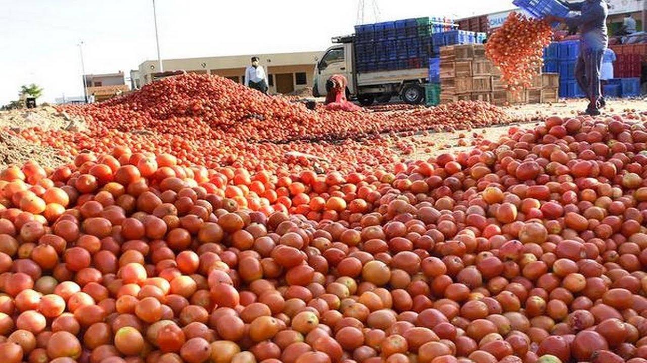 原来我们平时吃的番茄酱是这样生产和加工的,番茄酱生产加工全过程!
