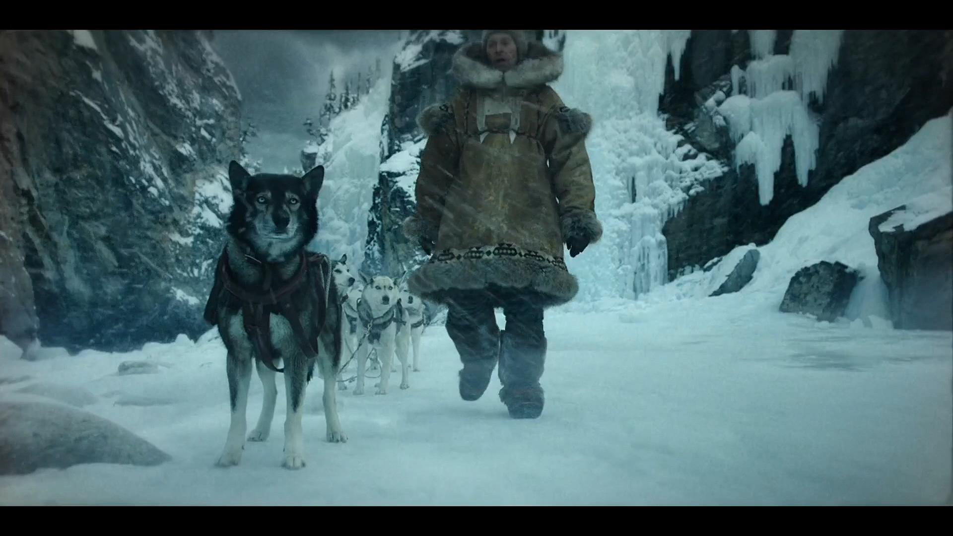 真实故事改编:一只无法驯化的狗跨越1085公里,拯救了全镇《多哥》
