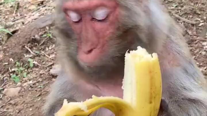 我敢打赌99%的人不如猴子吃的讲究[赞]