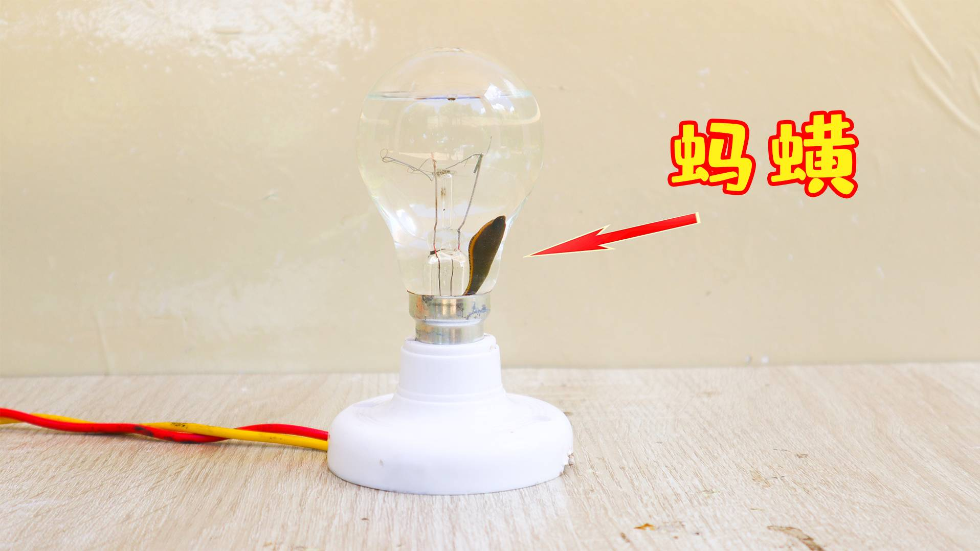 """将""""蚂蟥""""放进""""灯泡""""里面,接通电源,会发生什么?"""