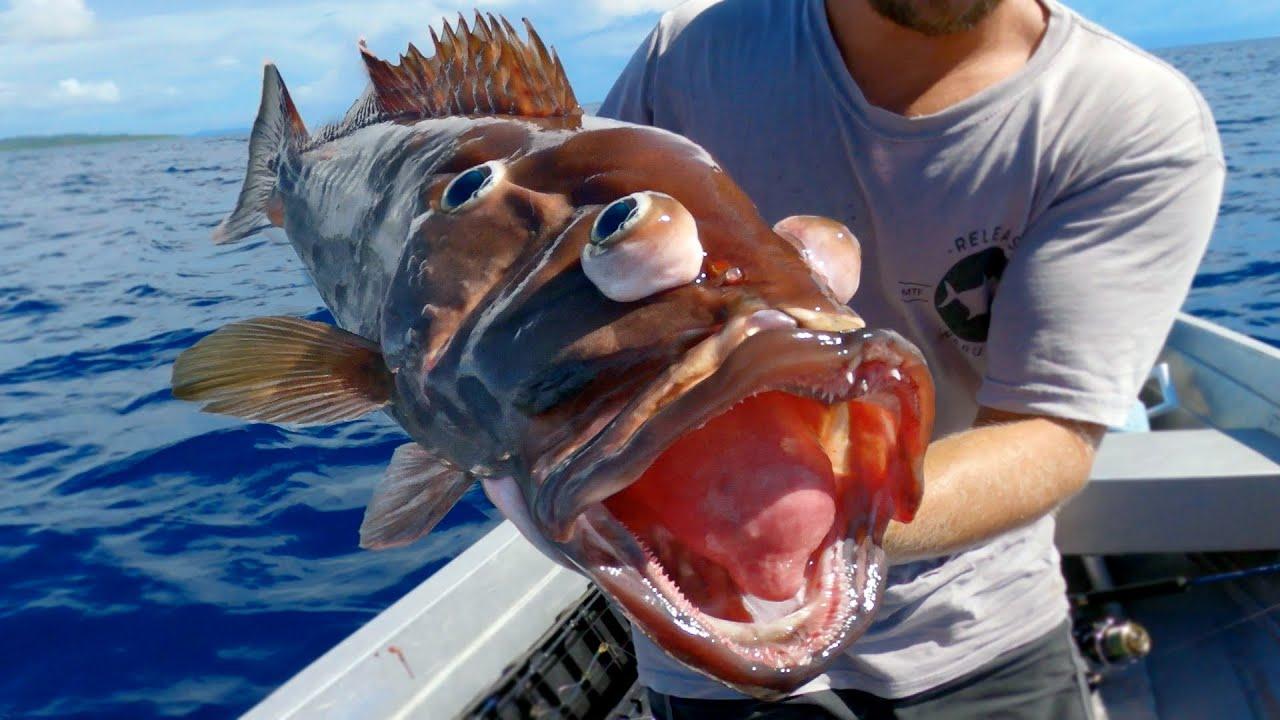 深海鱼,只要被钓上来为什么就会这样子呢!