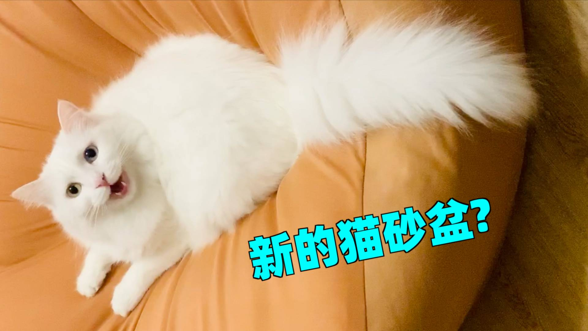 血的教训!养猫家庭千万别买懒人沙发!在猫眼里就是个巨型猫砂盆!