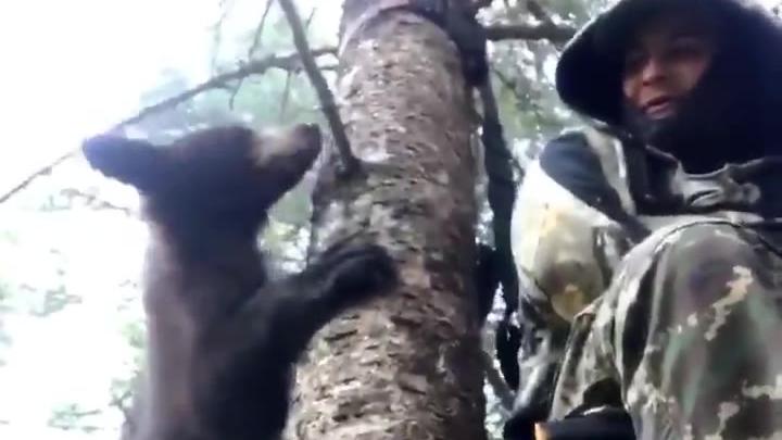 偶遇小熊还挺好玩的,除非熊妈妈来找孩子了[笑而不语]