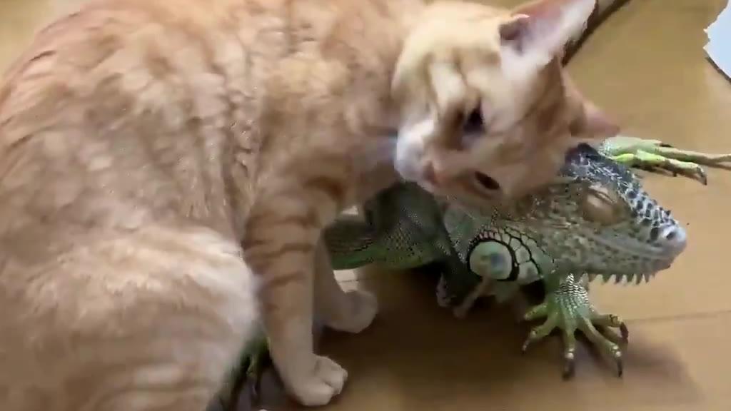 鬢蜥:真是个磨蜥的小妖精