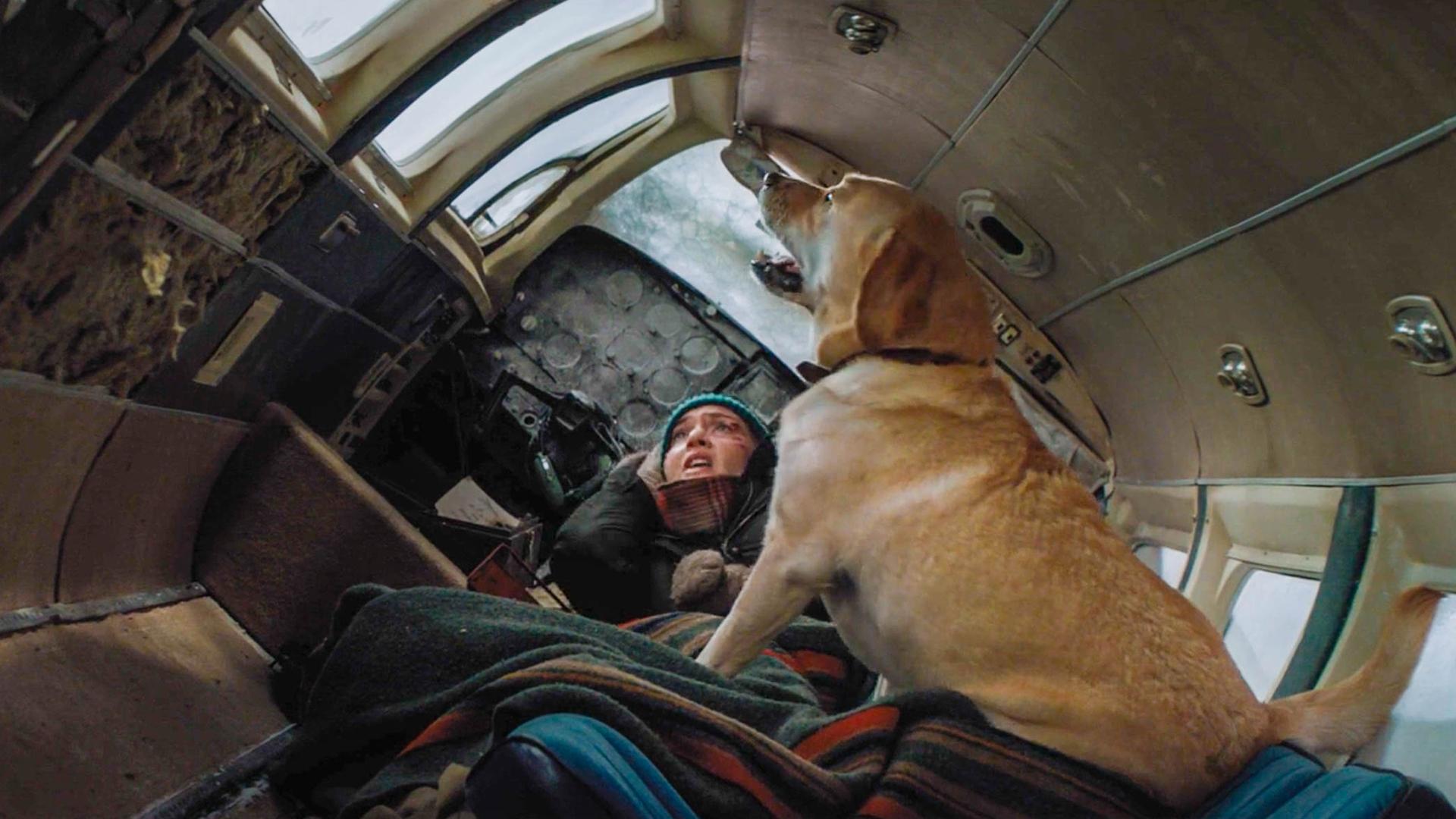 飞机失事女子被困野外,狗却对着窗外疯狂叫唤,往外一看脸色大变